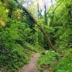 Haluzická tiesňava - slovenský prales
