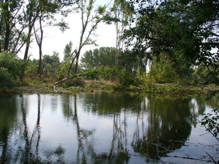 mokrade-dunajske-luhy