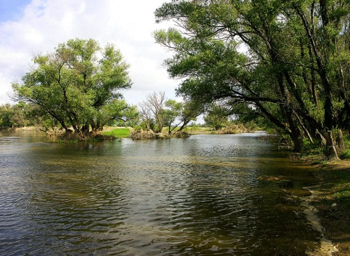 niva-rieky-morava